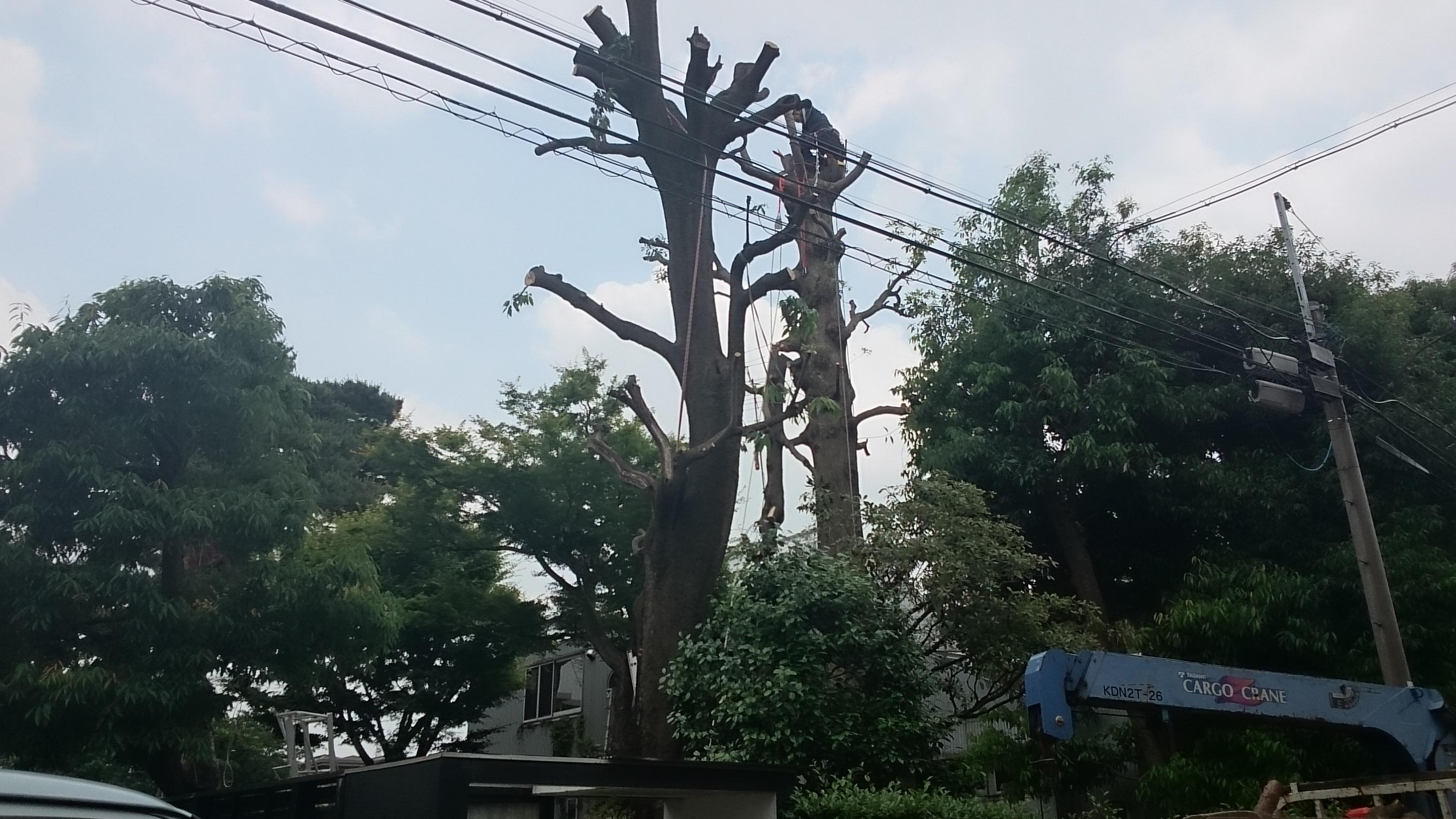 住宅街の樹木
