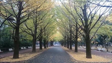 秋(曇天)の都立光が丘公園、紅葉真っ盛り(^^)/
