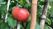 家庭菜園(^ ^)