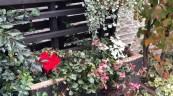 管理物件エントランスにお花植えて💐🌼