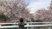 安全な花見を求めて石神井川遊歩道へ( ◠‿◠ )